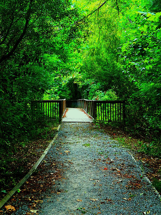 Trail Photograph - Forest Entrance by Ester  Rogers