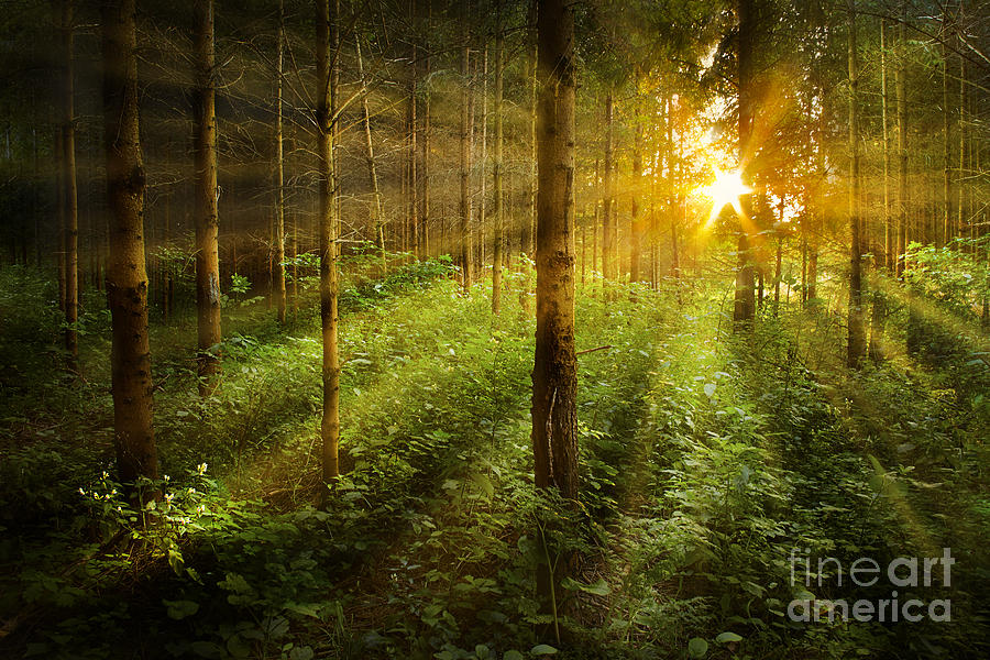 Forest Fairytale Photograph by Bernadett Pusztai