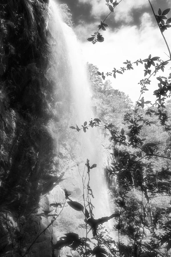 Black Photograph - Forest Falls by James Potts