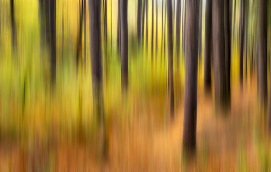 Abstract Photograph - Forest Fire by Bill Wakeley