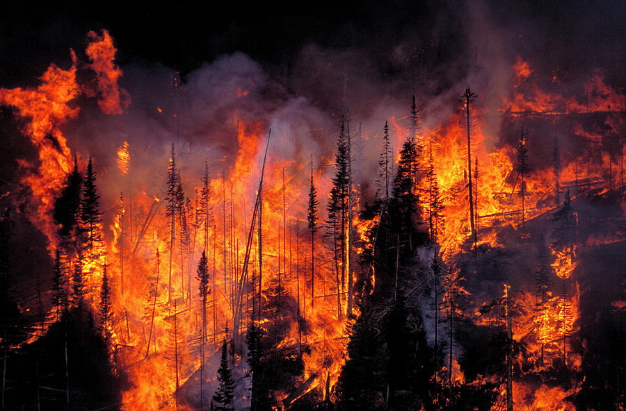 Fire Photograph - Forest Fire by Kari Greer/science Photo Library