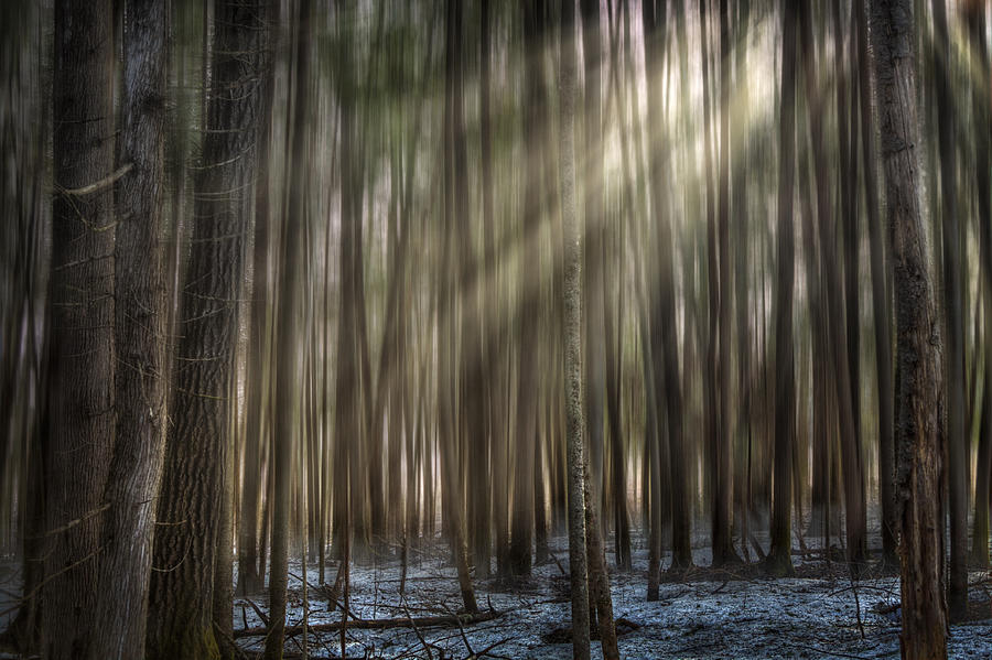 Rays Photograph - Forest Glow by Gary Smith