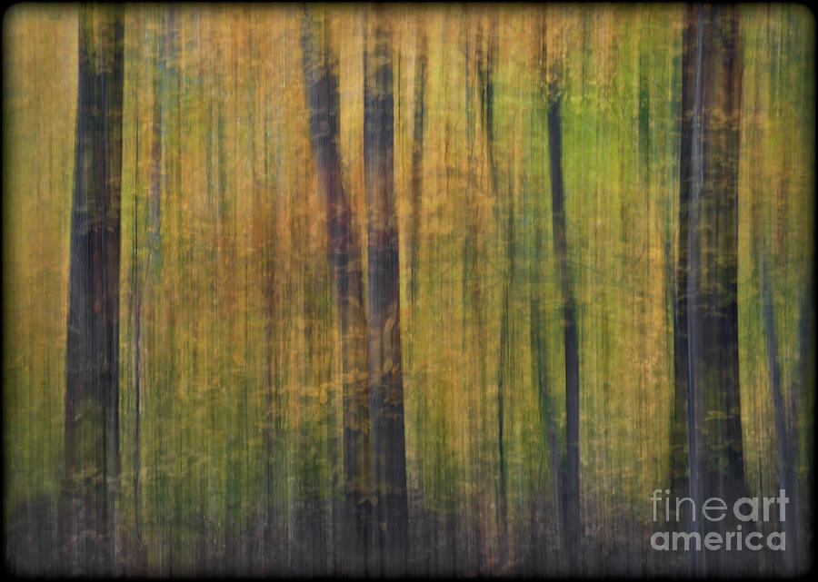 Woods Photograph - Forest Glow by Susan Candelario