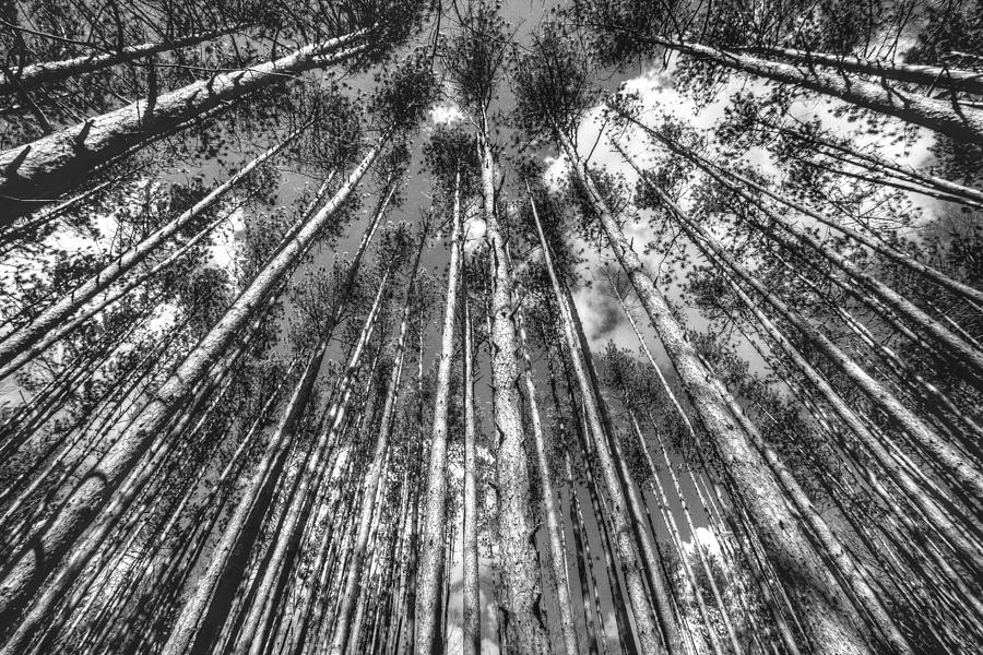 Landscape Photograph - Forest Guards by Dawn J Benko