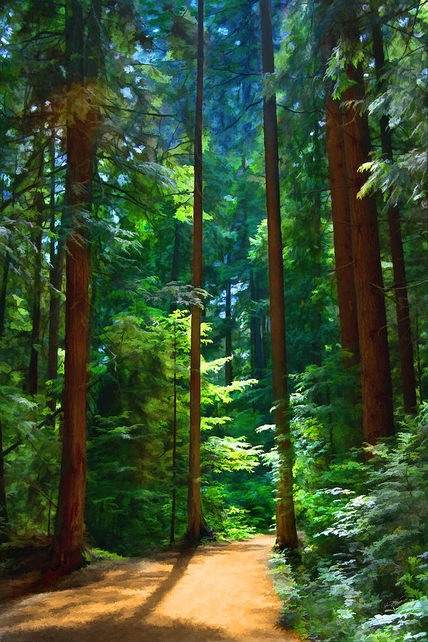 Tree Photograph - Forest Heights by John Robichaud