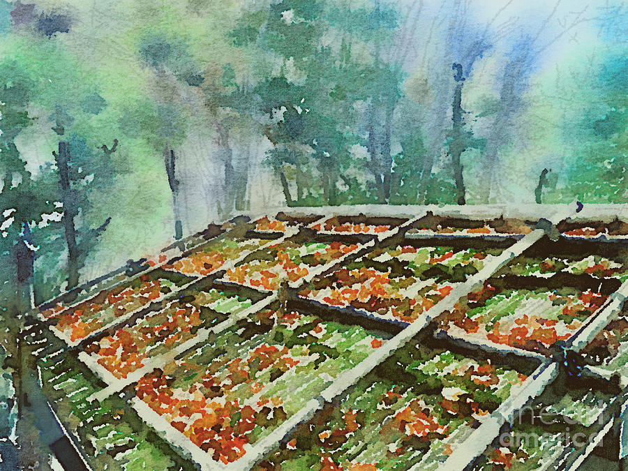 Forest Painting - Forest Hut Roof with Moss and Fallen Autumn Leaves by Beverly Claire Kaiya