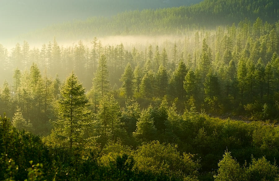 Forest illuminated by the rising sun Photograph by Brave-carp