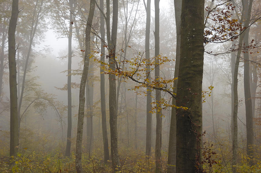 Trees Photograph - Forest In Autumn by Matthias Hauser
