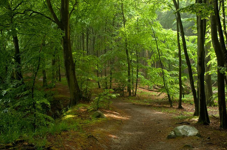 Ruegen Photograph - Forest by Iryna Soltyska