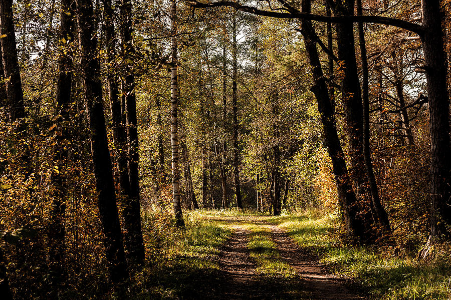 Forest Photograph - Forest by Illusorium Illustration