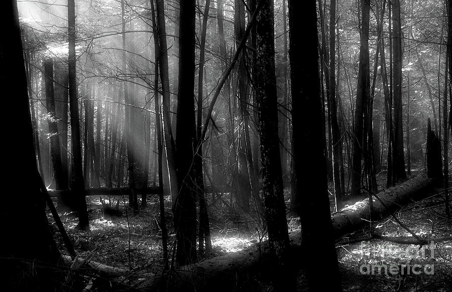 Forest Light In Black And White Photograph by Douglas Stucky