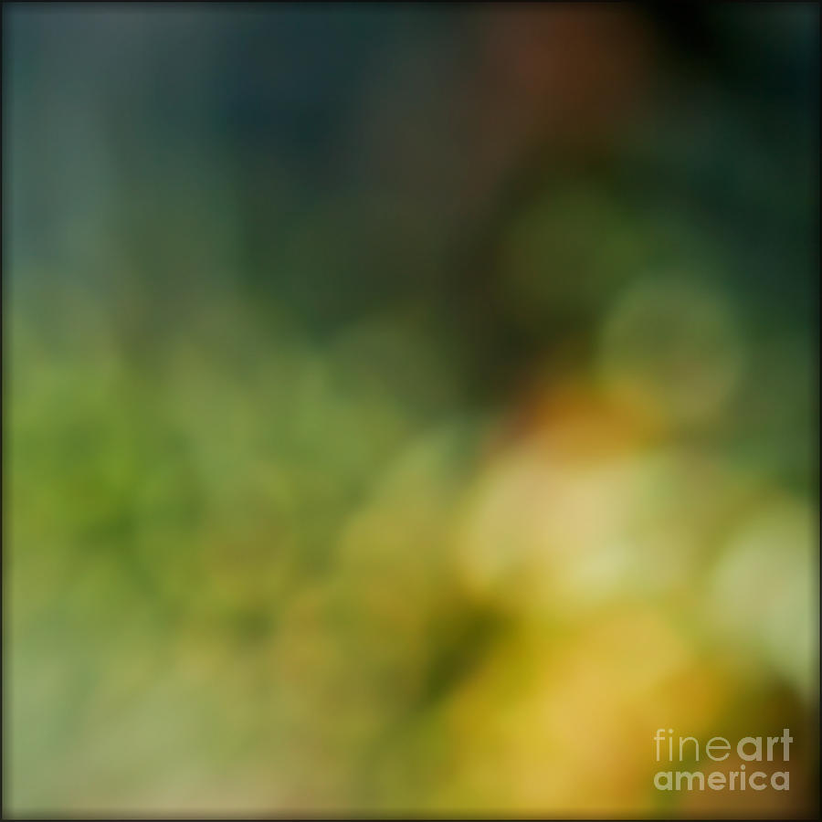 Abstract Photograph - Forest by Liz  Alderdice