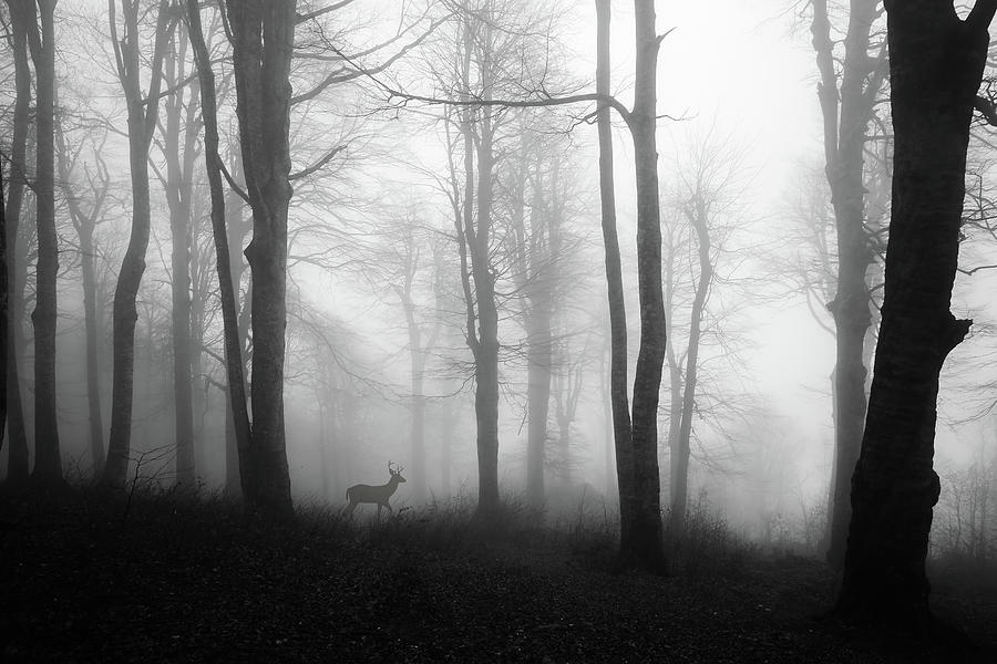 Deer Photograph - Forest by ?mm?  Nisan