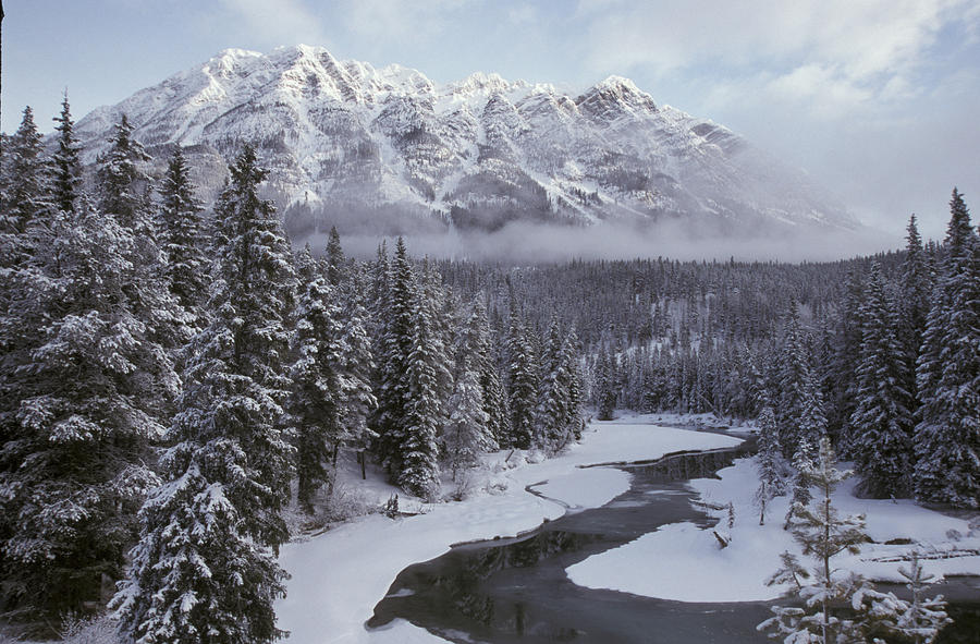 Forest Mt. Robson Provincial Park Bc Photograph by Mark Newman