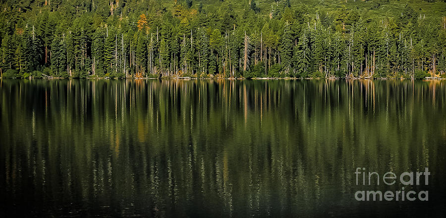 Pine Tree Photograph - Forest Of Reflection by Mitch Shindelbower