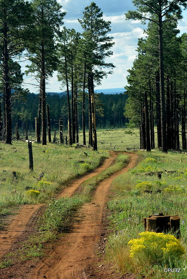 Flagstaff Photograph - Forest Path by Carrie Putz
