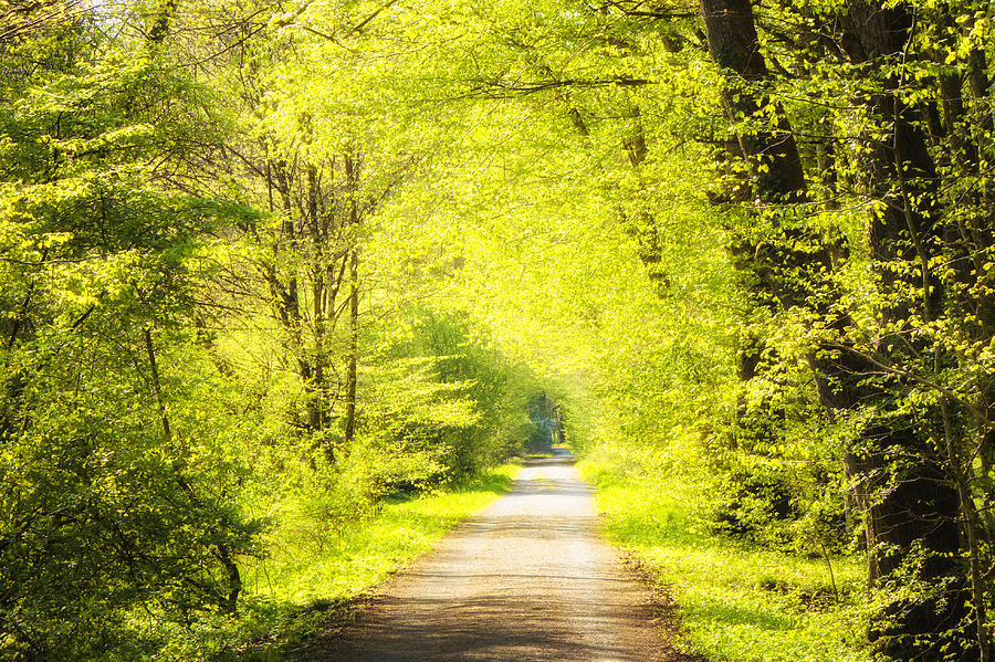 Green Photograph - Forest Path In Spring With Bright Green Trees by Matthias Hauser