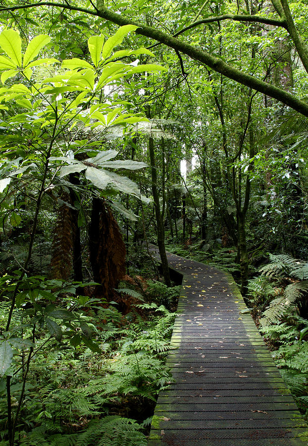 Boardwalk Photograph - Forest Path by Les Cunliffe