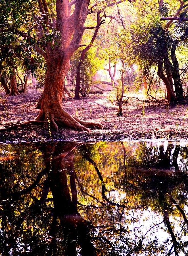 Reflection Photograph - Forest Reflection by Deepti Chahar