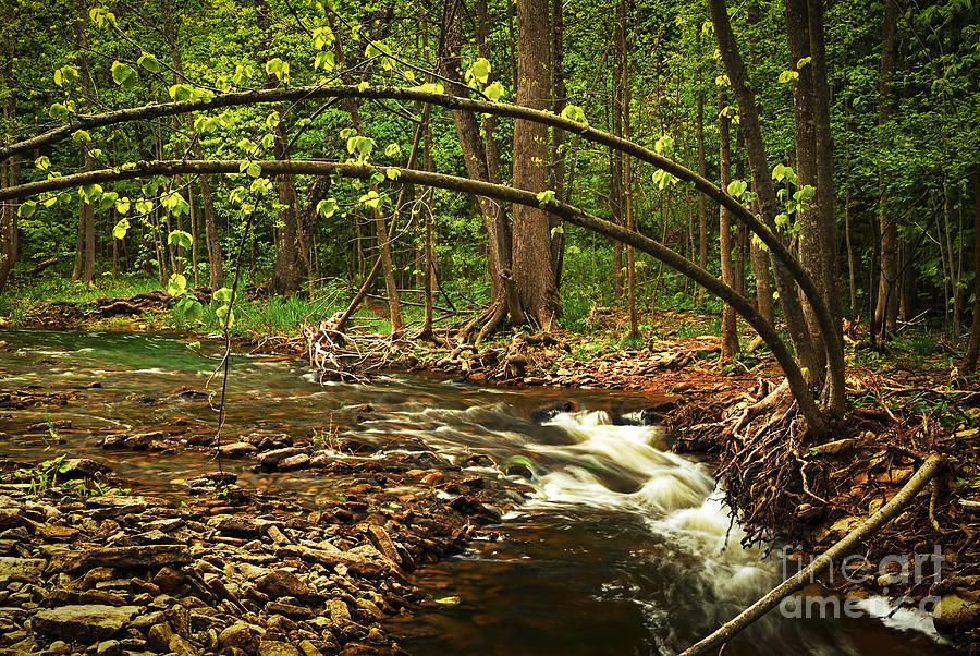 Waterfall Photograph - Forest River by Elena Elisseeva