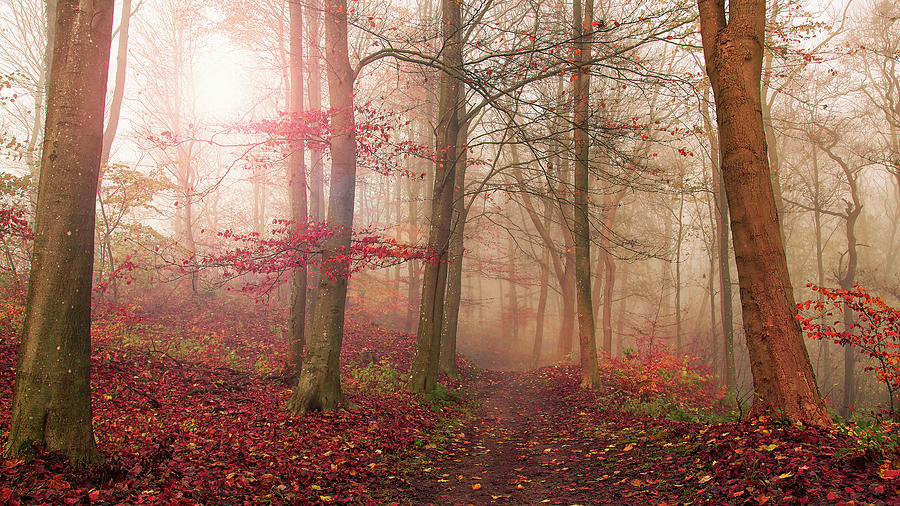 Denmark Photograph - Forest Scene. by Leif L??ndal