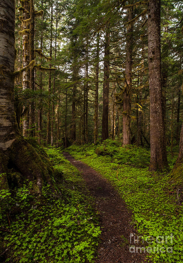 Northwest Photograph - Forest Serenity Path by Mike Reid