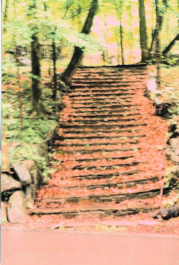 Stairs Photograph - Forest Steps by James Potts