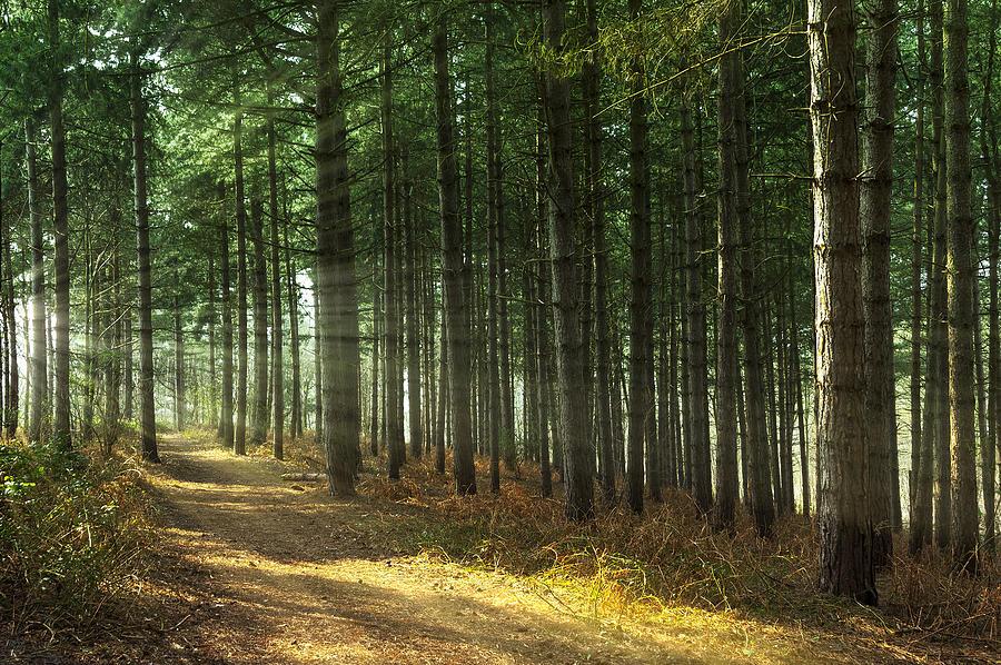 Beautiful Photograph - Forest Sun Rays by Svetlana Sewell