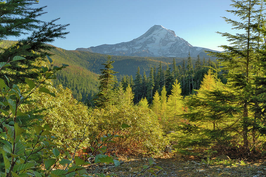 Oregon Photograph - Forest View by Arthur Fix