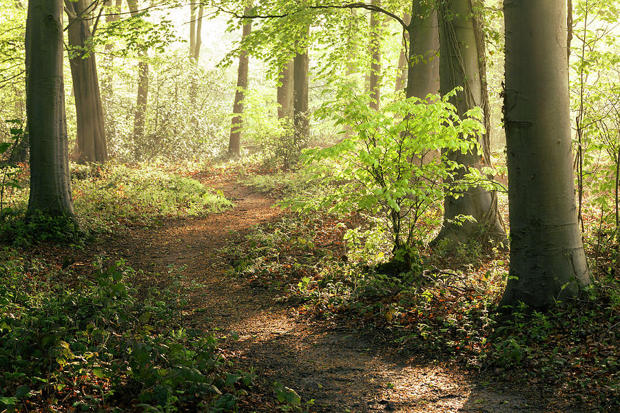 Forest Walk Photograph by Image By Chris Winsor