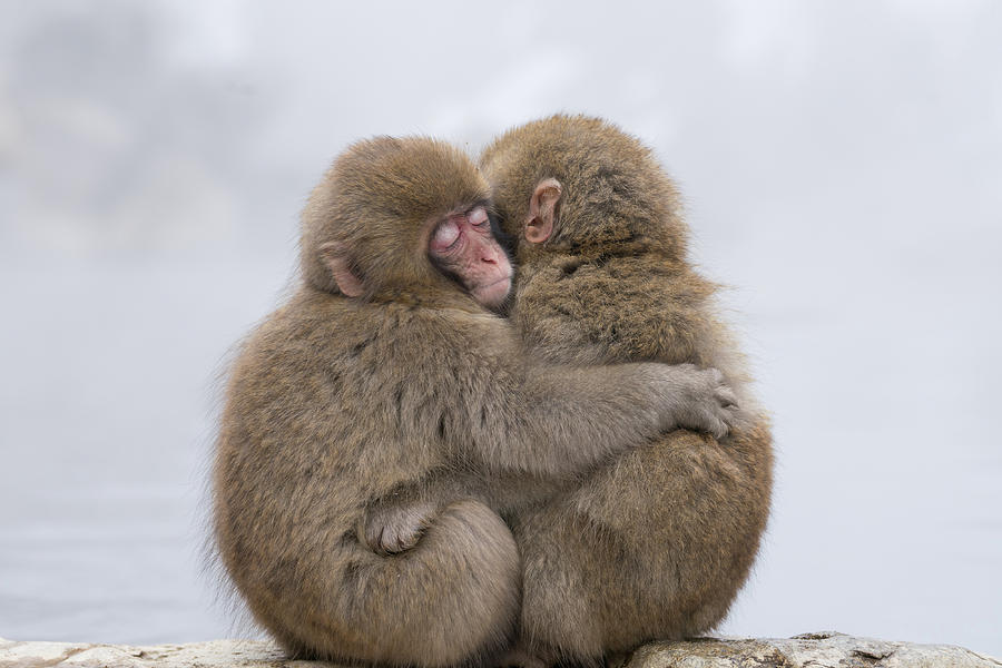 Hug Photograph - Forever Friends by Takeshi Marumoto