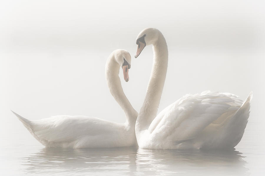 Nature Photograph - Forever by Monika Schwager