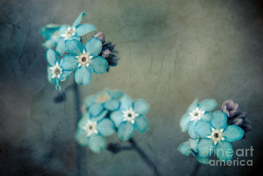 Blue Photograph - Forget Me Not 01 - S22dt06 by Variance Collections