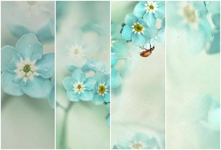 Teal Photograph - Forget Me Not..... by Ellen Van Deelen
