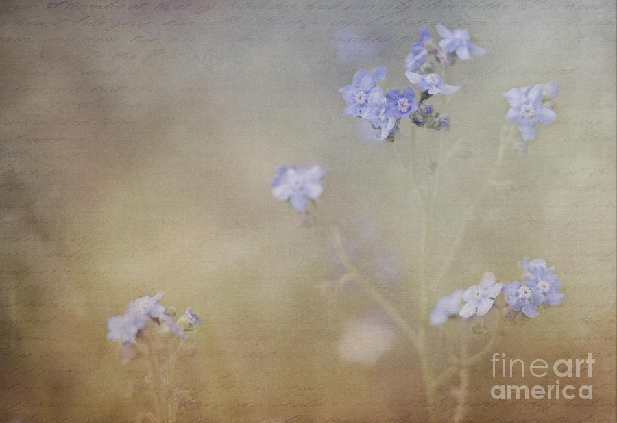 Forget-Me-Not by Pam  Holdsworth