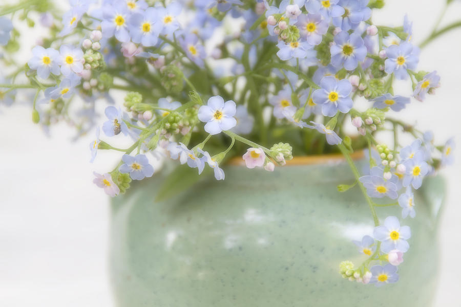 Forgetmenots Photograph - Forget-Me-Nots in a Vase by Peggy Collins