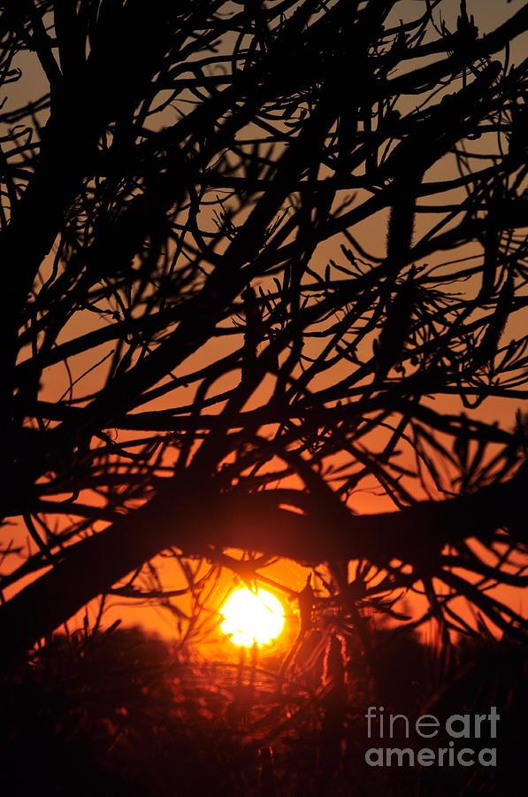 Sun Photograph - Forgive Sunlit Oracle Card by Coralie Plozza