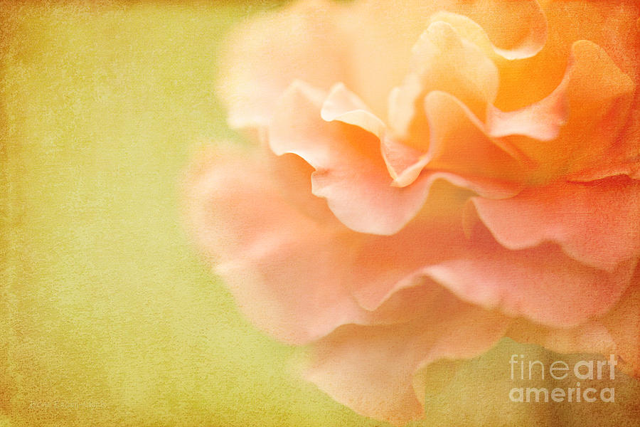 Bloom Photograph - Forgiveness by Beve Brown-Clark Photography