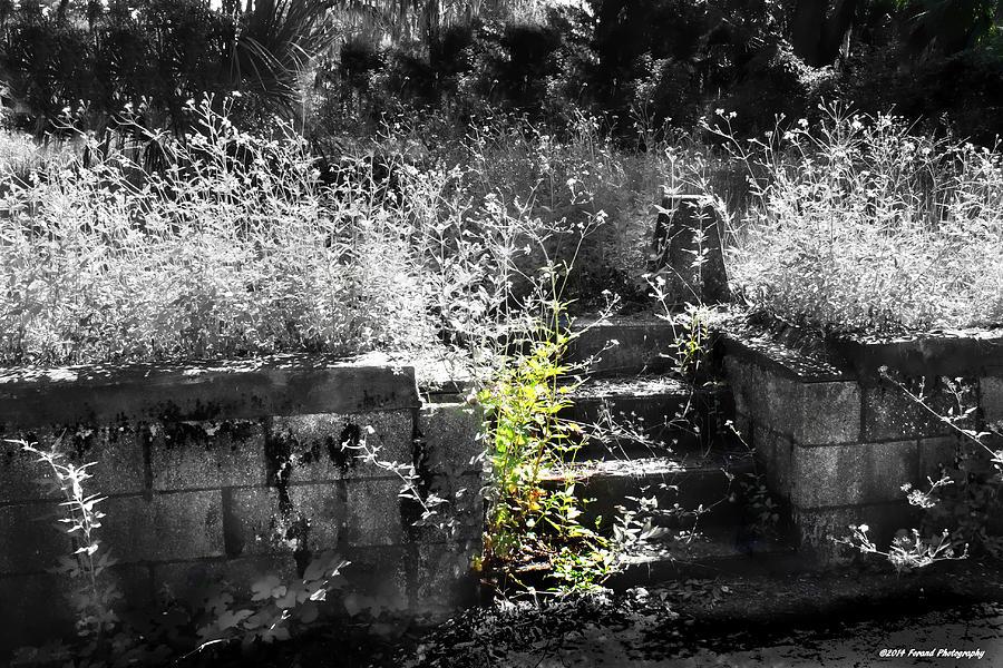 Cemetery Photograph - Forgotten  by Debra Forand