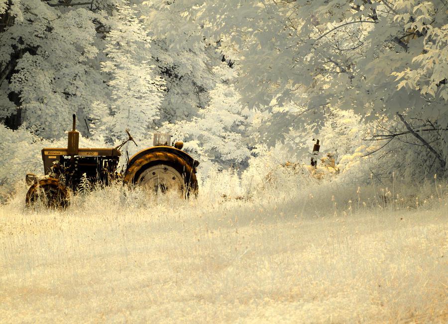 Field Photograph - Forgotten Harvest by Luke Moore