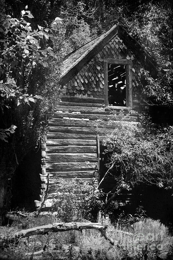 History Photograph - Forgotten Log Cabin by Cindy Singleton