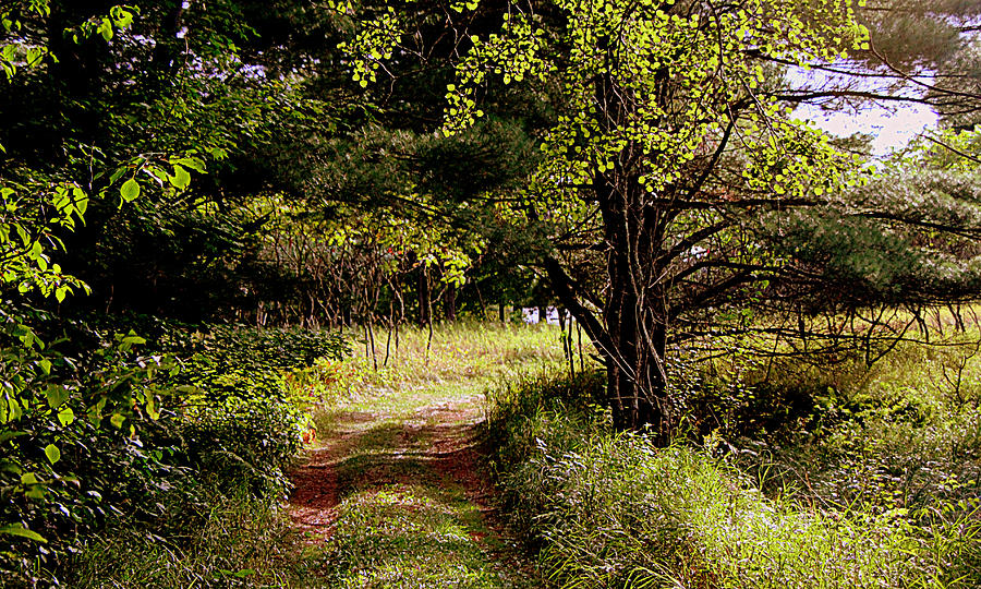 Landscape Framed Prints Photograph - Forgotten Road by Tam Graff