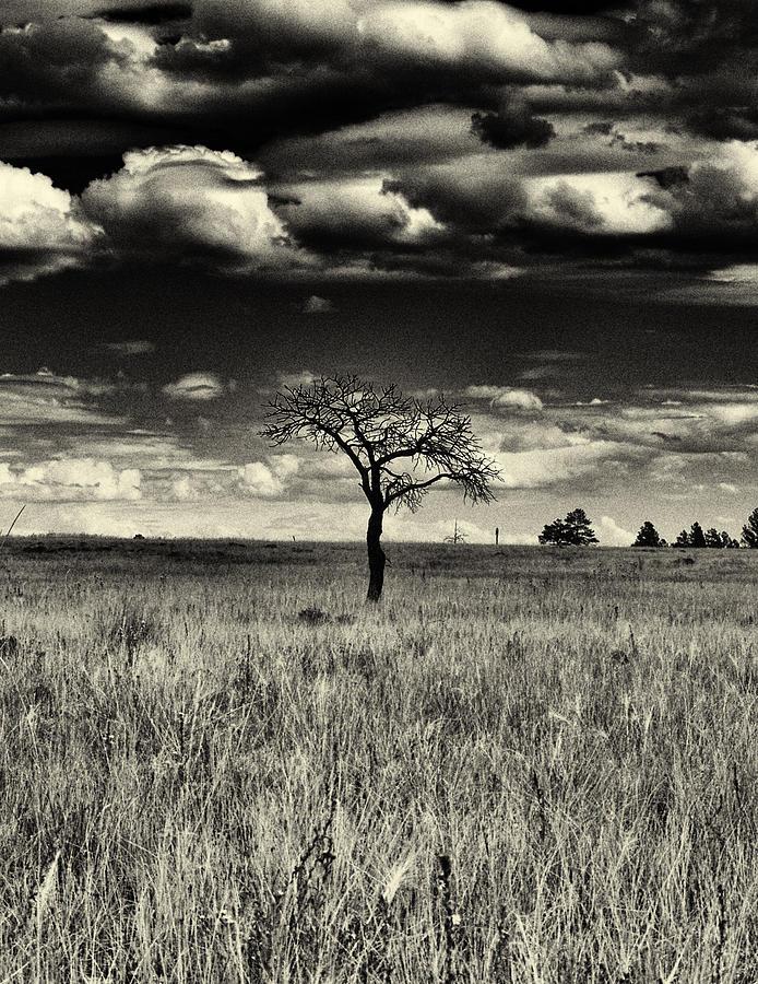 Buffalo Park Photograph - Forgotten Tree by Joshua House
