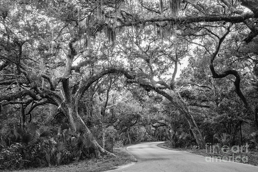 Oak Tree Photograph - Fort Clinch Live Oaks by Dawna  Moore Photography