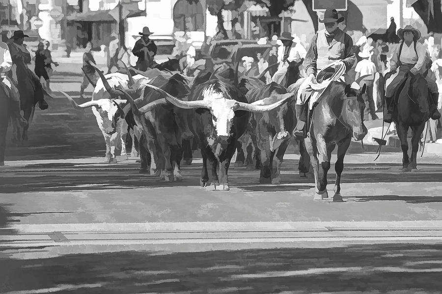 Fort Worth Herd Cattle Drive Photograph