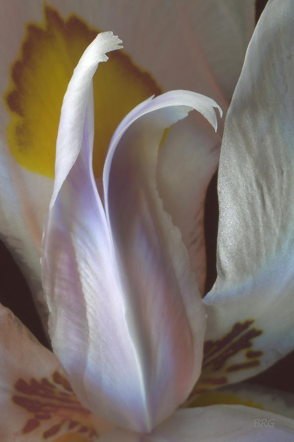 Wild Iris Photograph - Fortnight Lily Composition No 3 by Ben and Raisa Gertsberg