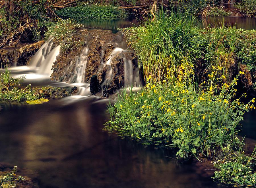Arizona Photograph - Fossil Creek by Leland D Howard