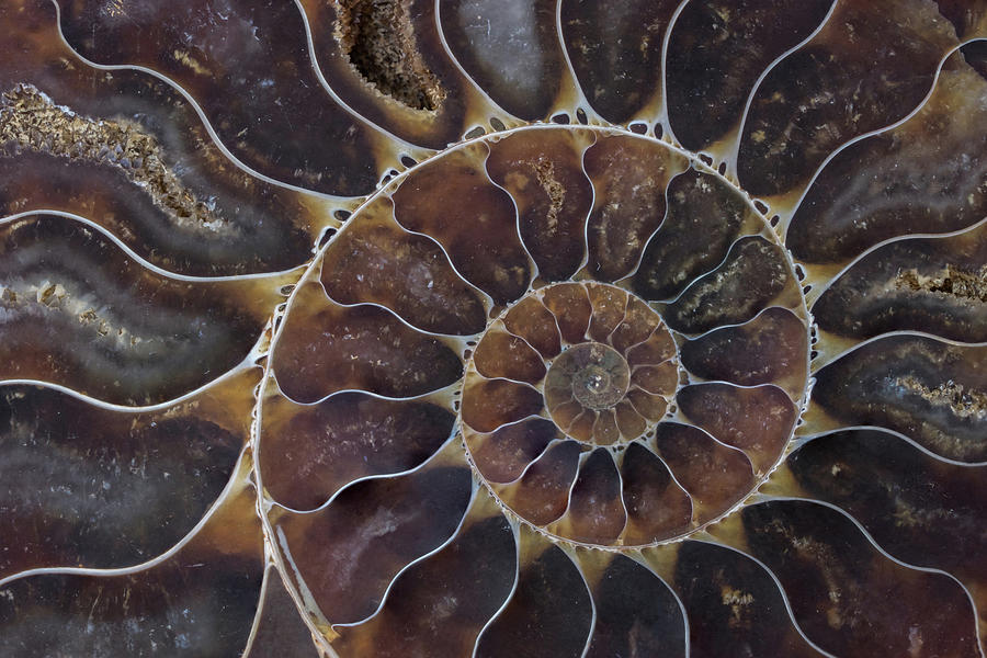 Fossil Shell Macro Texture Photograph by Ballball14