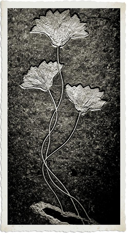 Fossils Photograph - Fossilized Flowers by Dan Sproul