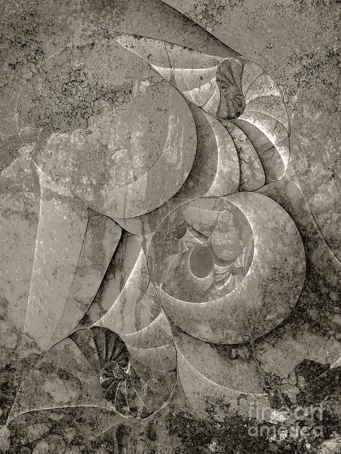 Abstract Digital Art - Fossilized Shell - B And W by Klara Acel
